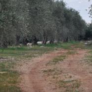Carretera Central e la Provincia di Siena in Libano. Un servizio di Tg2 Punto.it